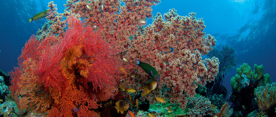 Coral reef_photo Mark Snyder
