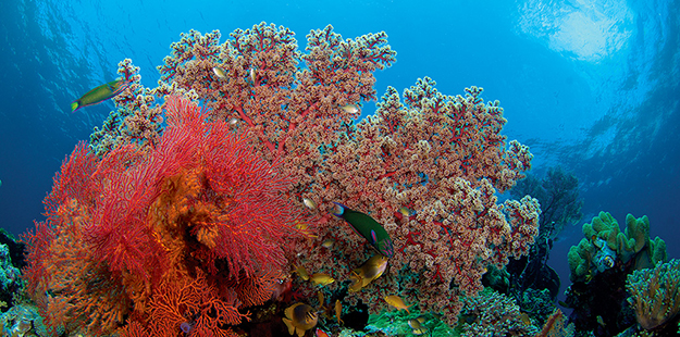 "As a GPS ocean floor geographer, Stephan Becker has witnessed many coral reefs, and claims those at Wakatobi ""took my breath away on several occasions."" Photo by Mark Snyder"