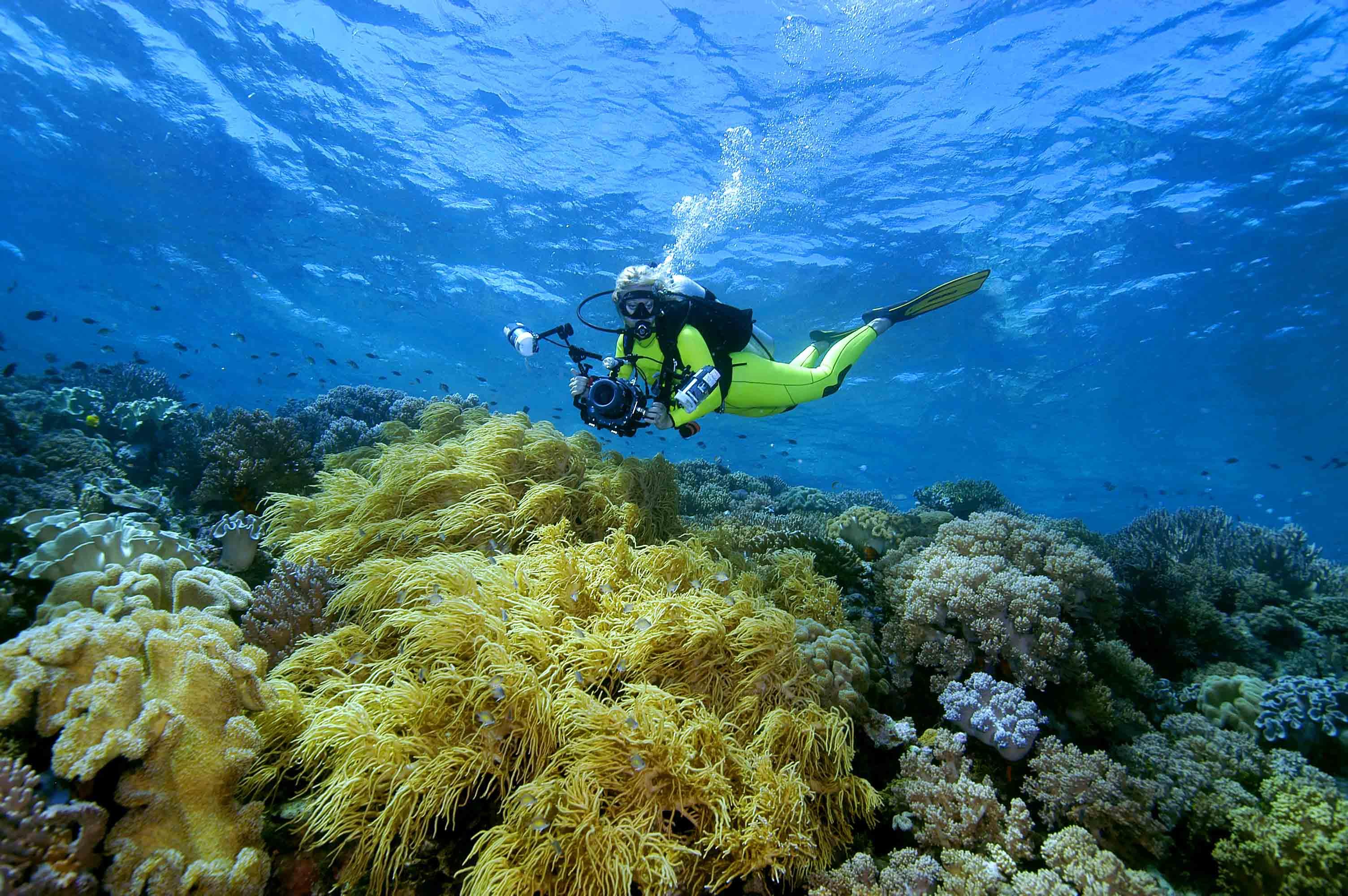 Marine Life Sightings