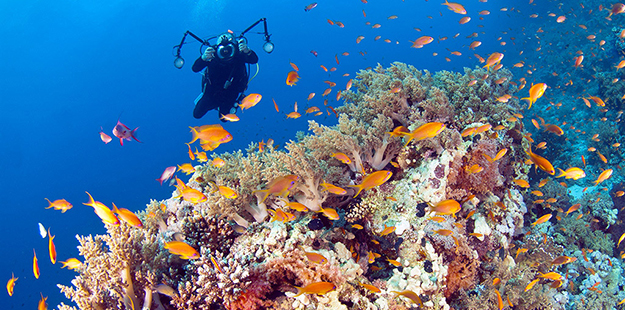 Coral reefs that sport a diverse wealth of marine life bring photographers from around the globe to Wakatobi. Photo by Wakatobi Dive Resort
