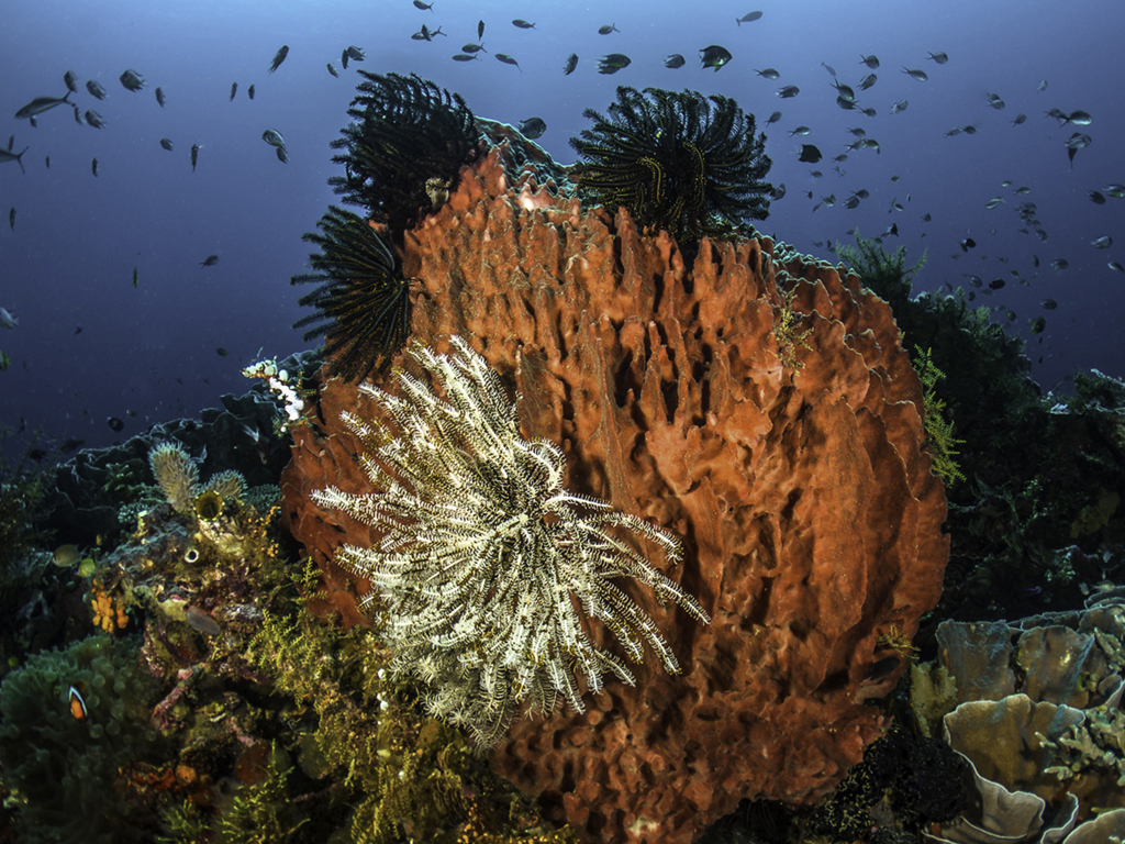 Luckily, at some places on the planet, coral reefs are still as pristine  as we expect them to be,such as those at Wakatobi. (photo by Wayne