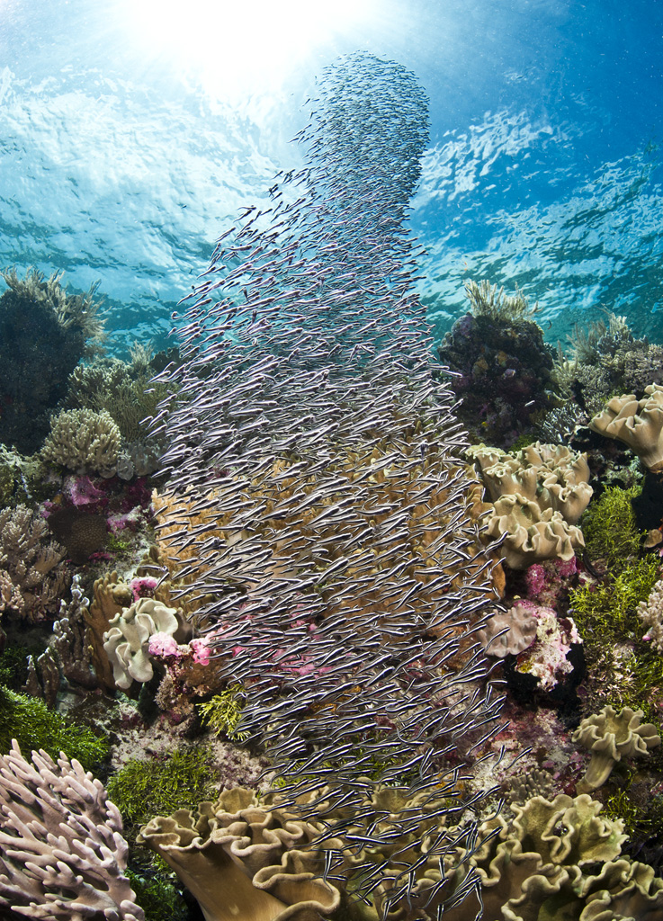 Abundant marine life and diversity reflect Wakatobi Dive Resort's efforts to protect this enchanted kingdom and provide hope to future generations who may be lucky enough to see such pristine coral reefs. (photo by Warren Baverstock)