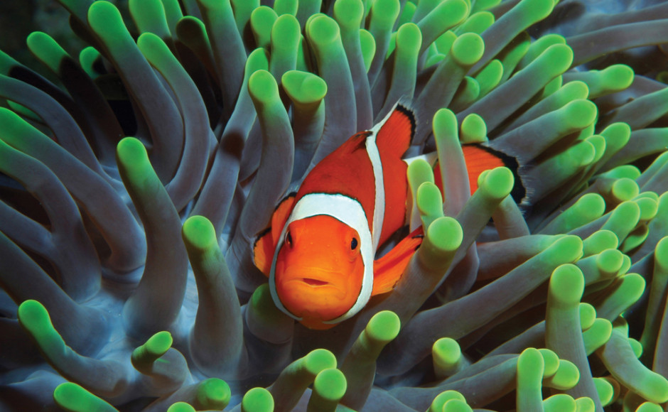 sea anemone and clownfish mutualism relationship in rainforest