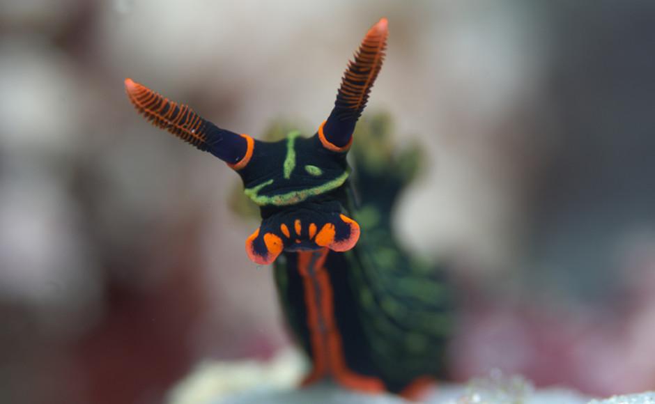 Nudibranch photo by Wakatobi guest Richard Smith