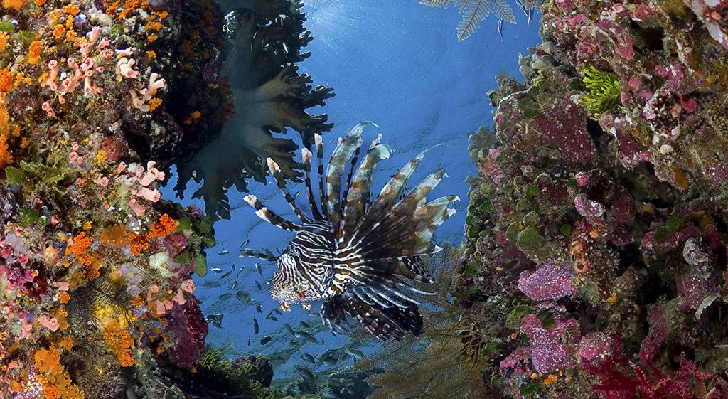 Marine Life Biodiversity