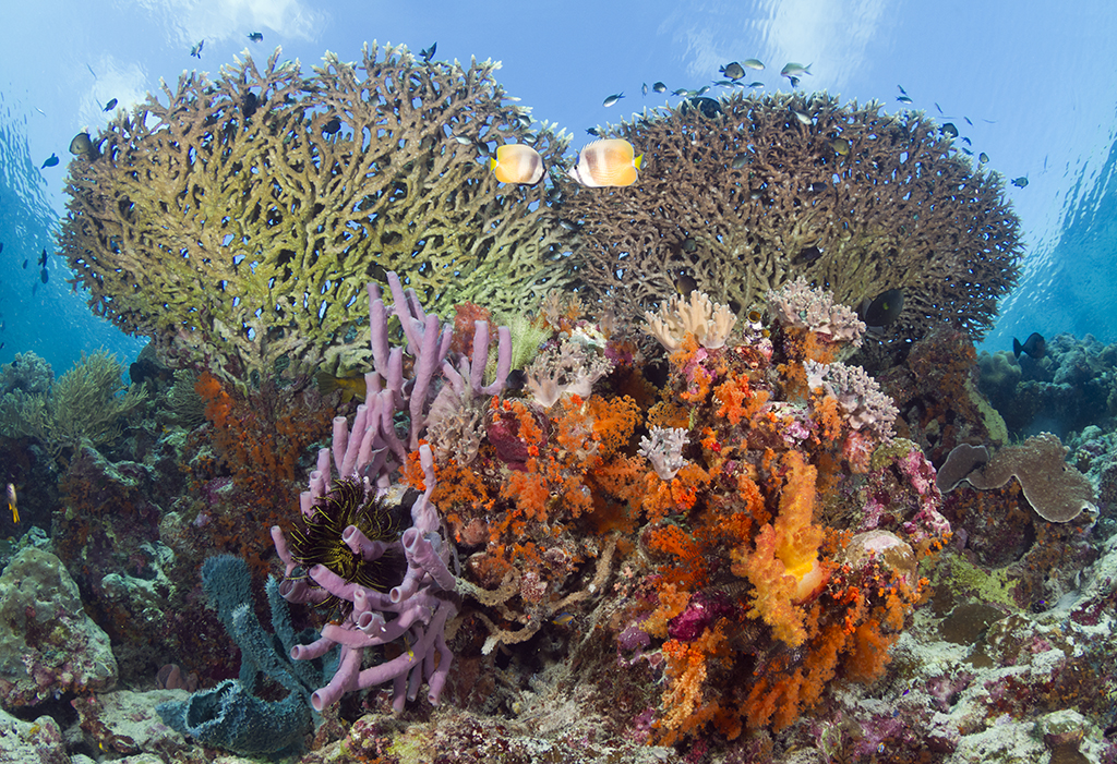 Coral formations on the edge of Wakatobi's House Reef wall