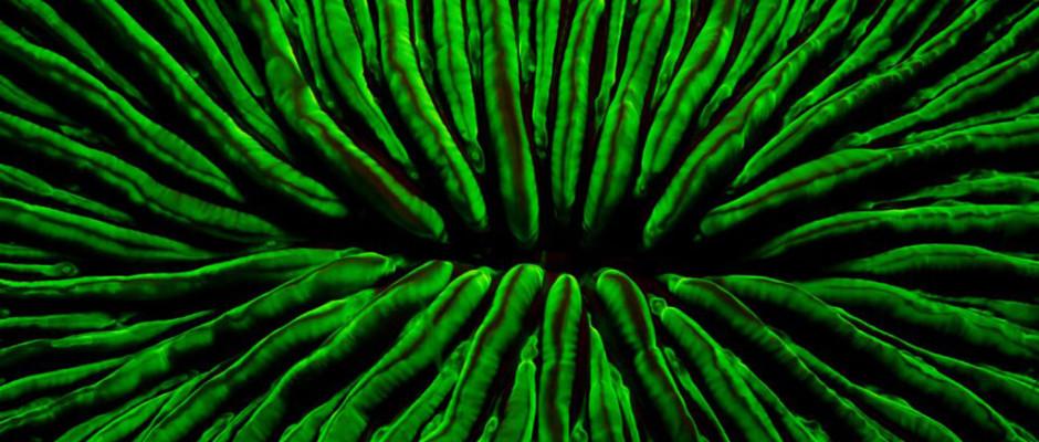 fluo mushroom coral