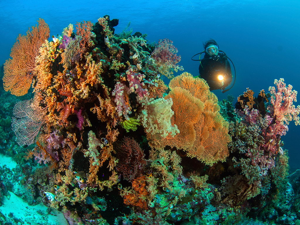 "To dive both muck sites and stunning reefs is a genuine treat, and the Pelagian cruises cover it all."" – Bob & BarbHay, Dec 2012 photo by Wakatobi guest Richard Smith"