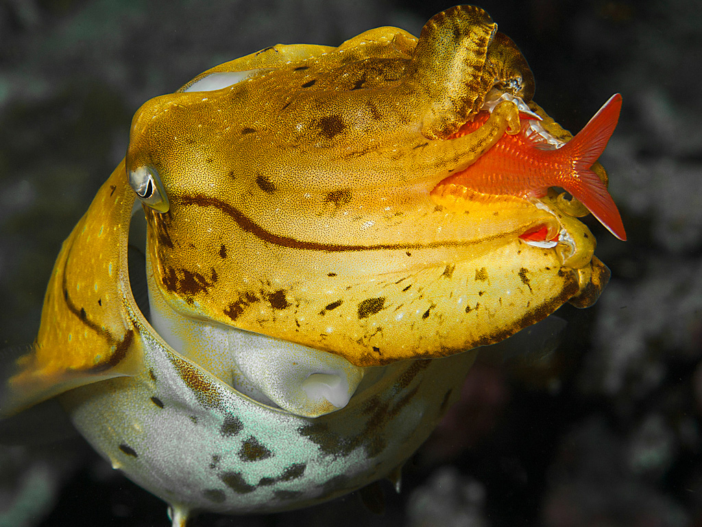 Taste, colors, smells, sounds, touch – it all changes when water is added.  photo by Wakatobi guest Larry Abbott