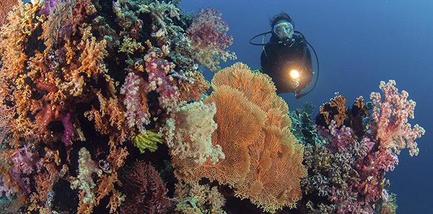A diver inspects a vibrant reef at Wakatobi. Image taken using a 10.5 mm fish eye lens. F5.6, 1/125th, ISO 100. Photo by Richard Smith