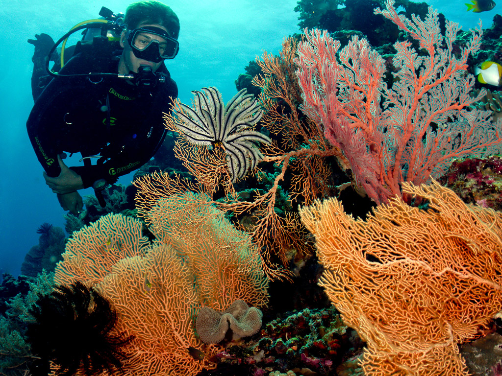 photo by Wakatobi guest Wayne MacWilliams