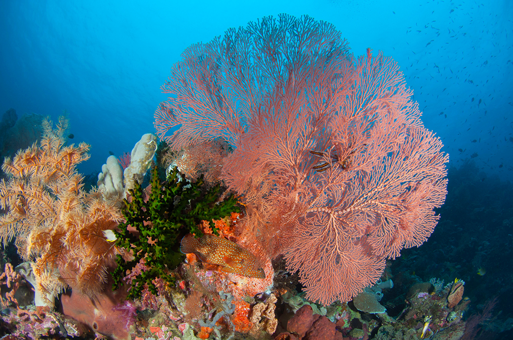 Colourful reef typical of Wakatobi