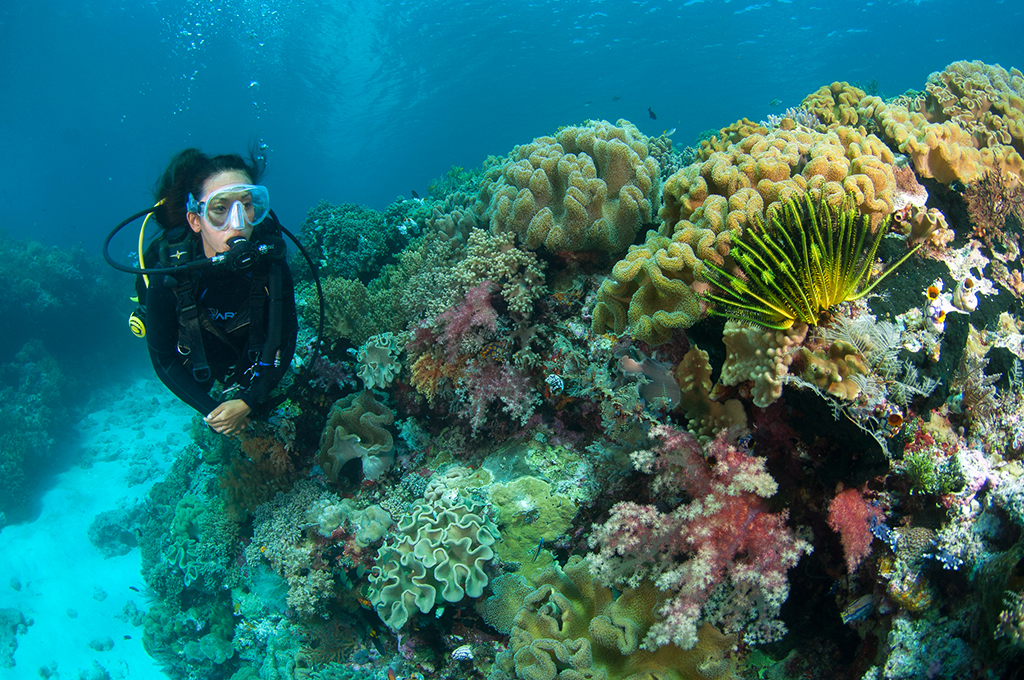 A diver inspects a vibrant reef at Wakatobi. Image taken using a 10.5 mm fish eye lens. F5.6, 1/125th, ISO 100.