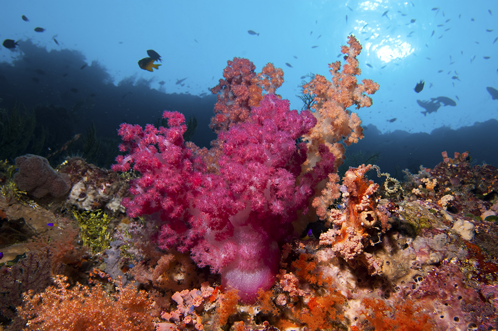 """Such a variety of living corals is not so common anymore elsewhere and also the small creatures you find is amazing. It is a must see for all divers.""  Ines Cogliati, Sept 2013 photo by Karin van de Wouw"