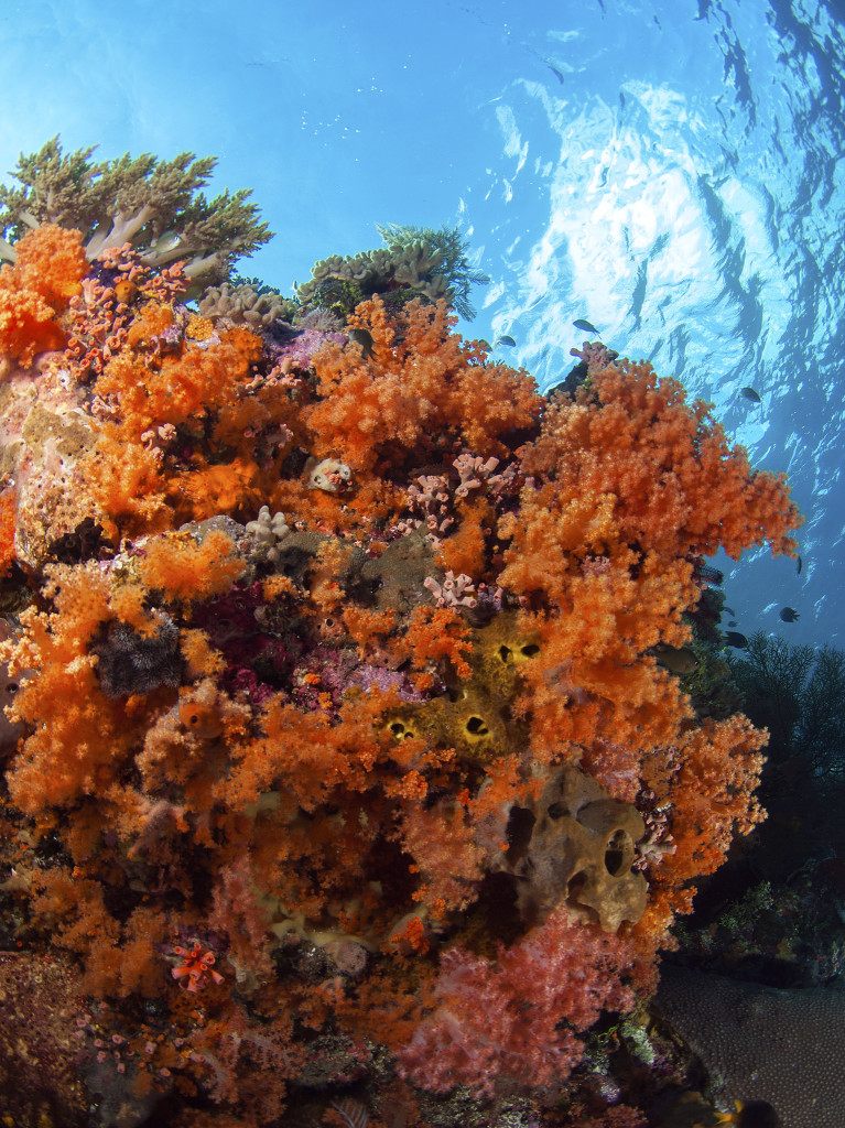 Wakatobi soft corals_blog_photo Richard Smith
