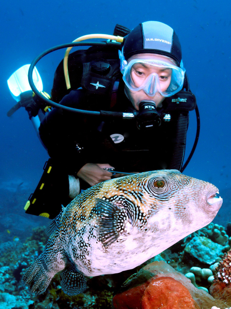 According to many reputable sources, puffing up too often can be very stressful to the pufferfish. So, as marine life lovers and photographers we must respect these wondrous creatures and not create undo stress by keeping our distance, even when we think it might be ok.   Photo by Wayne MacWilliams