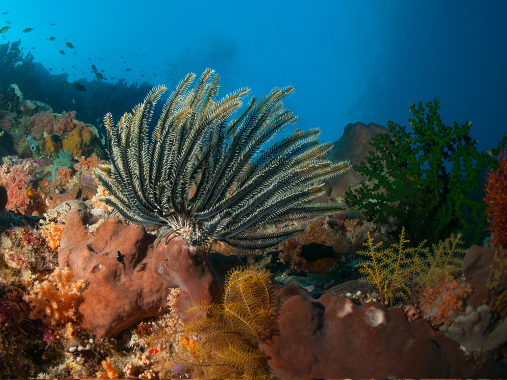 During a quiet moment as the sun goes the reef's creatures search for a place to spend the night.  Photo by Allan Saben