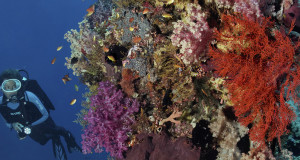Seamounts and Muck