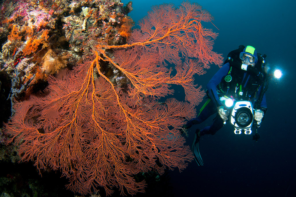 Fan 38 West, shown here, is often combined with Fan 38 East, for a relaxing, picturesque extended dive.  photo by Mark Snyder