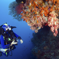 Rebreather diver on Magnifica, a spectacular wall dive at Wakatobi photo by Walt Stearns