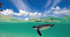 Wakatobi's Turtle Nursery