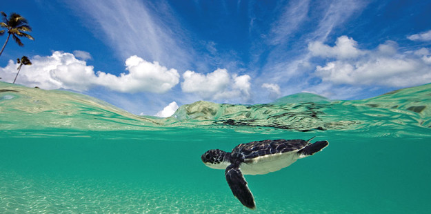 1000x430_green turtle_William van de Wouw