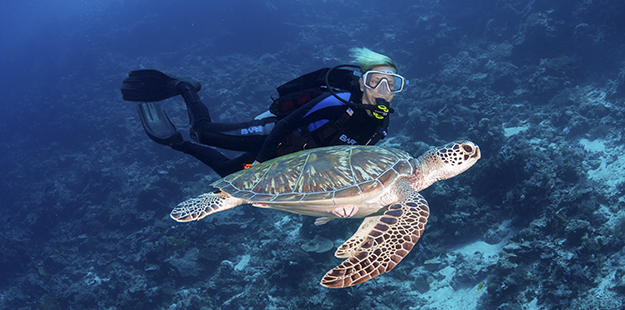 With slow and deliberate movements divers and snorkelers can experience close encounters with sea turtles. Photo by Walt Stearns