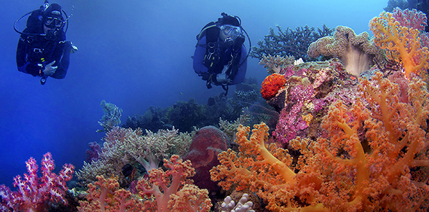 Soft corals at Wakatobi 625 x 310_Mark Snyder