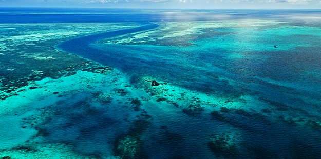 By late 1997 large areas of reef track were placed under official protection and the Collaborative Reef Conservation program was expanded to encompass 20 kilometers of reef. Photo by Didi Lotze