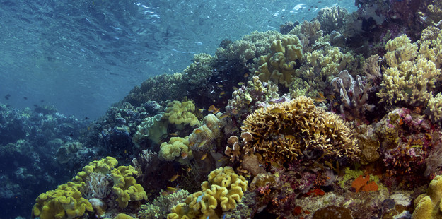House reef crest snorkeling_feature_WS