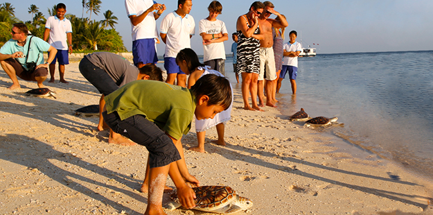 ne of the highlights for many children is to visit Wakatobi's turtle nursery and participate when turtles are released to the wild. Photo by Wakatobi Dive Resort