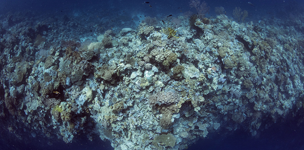 Seen here from above, Blade's profile, with it's expansive, near vertical contours and shallows covered in sponges, brilliant hard and soft corals, and fish life, provides opportunities for extended, multi-level dives for those on CCR. Photo by Walt Stearns