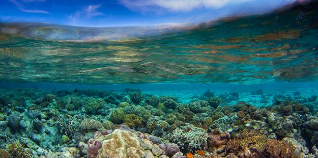 Shallow reef off beach at Wakatobi_Steve Miller