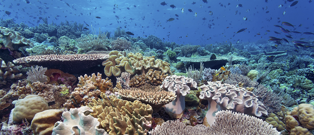 At Home on the House Reef