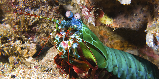 Whether your objective is to capture a wide angle scenic or a close up of a feisty mantis shrimp, Wakatobi's shallow reefs and inshore grass beds provide a wealth of photo opportunities for snorkelers of all skill levels. Photo by Walt Stearns