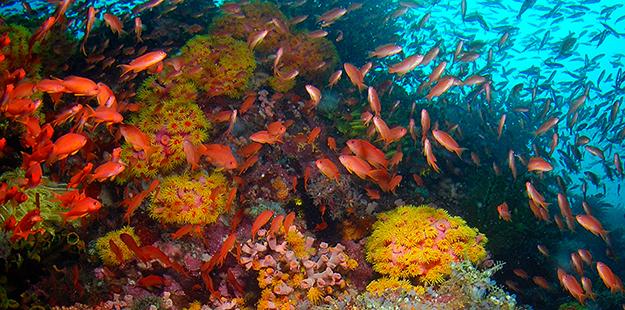 house reef drop off_Steve Miller