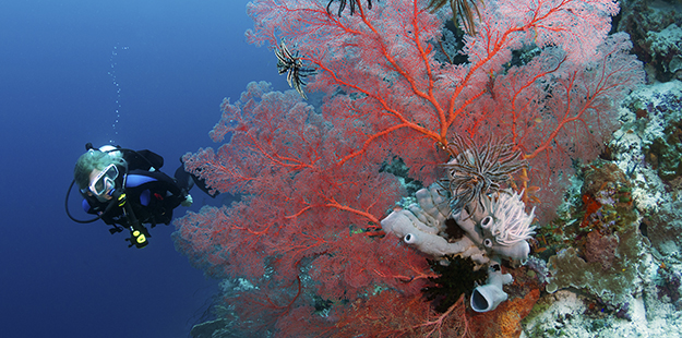 Pinki's wall sea fan with crinoids and seahorses_photo Walt Stearns-MG_5198