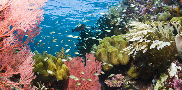 Right off the resort's beach the House Reef shallows explode with color and life.
