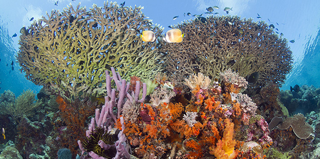 Coral formations on the edge of Wakatobi's House Reef wall. Photo by Walt Stearns
