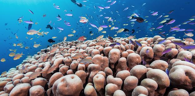 Coral-head-Marco-Fierli