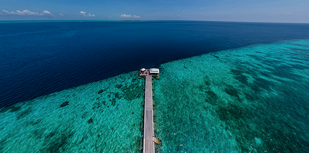 Wakatobi's House Reef and surrounding reefs are some of the healthiest on the planet.