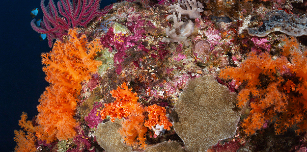 Malabea-hard-and-soft-corals_Marco-Fierli