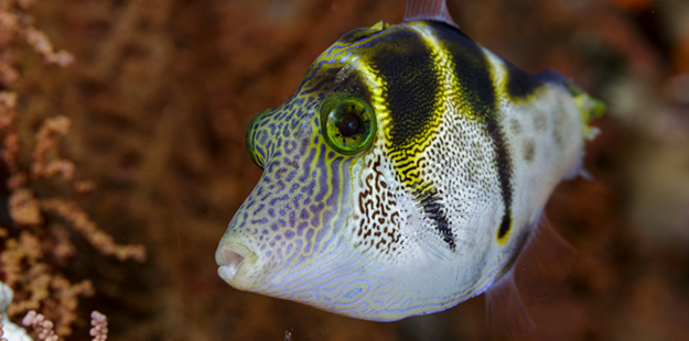 puffer-profile-MF-IMG_0154