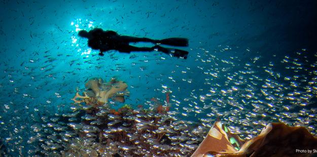diver-silhouette-wakatobi-feature_steve-miller