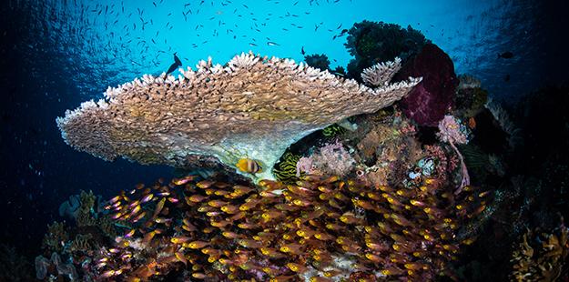 wakatobi-barracuda-glassfish-wayneosborn