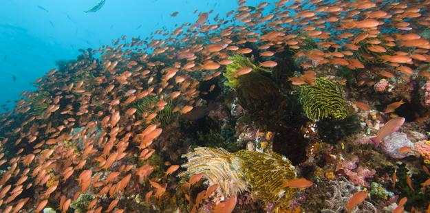 wakatobi-resort-healthy-reef-ws