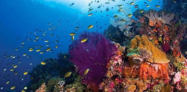 wakatobi-coral-reef-slope