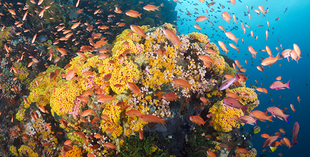 Wakatobi resort healthy coral reef Walt-Stearns