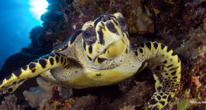 Seeing Sea Turtles