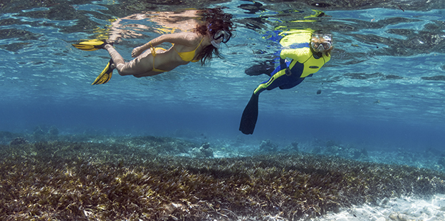Gliding across the seagrasses at Wakatobi will bring hours of engaging marine life encounters.